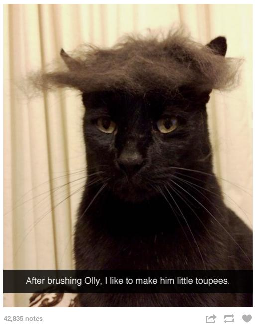 Cat Toupee