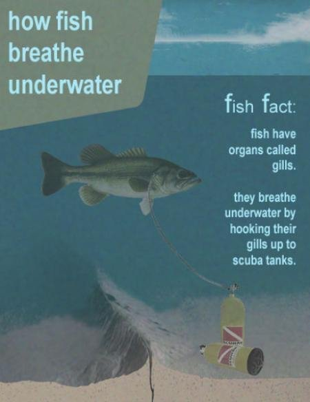 Fish Breathe with Scuba Tanks