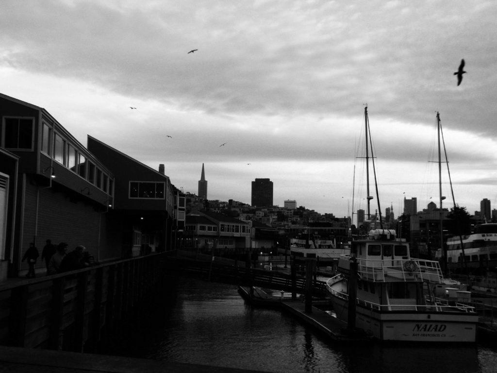 Birds soar over pier 33 1