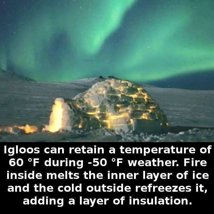 igloo facts