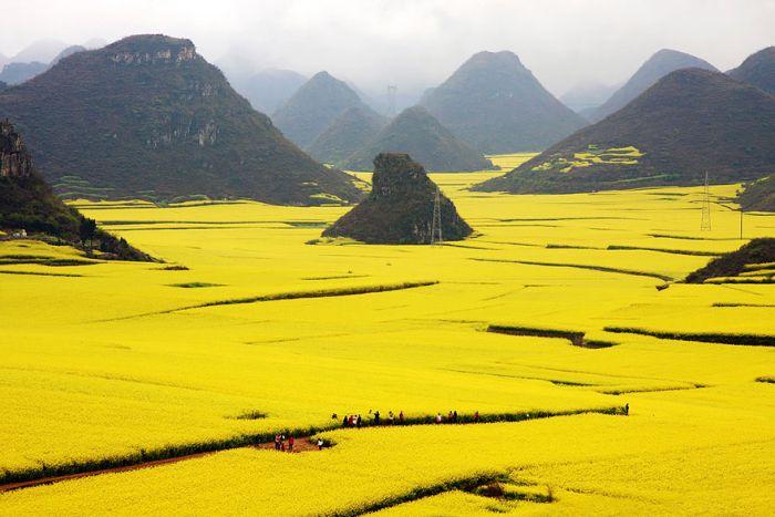 vast fields among mountains