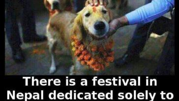 nepali dog festival