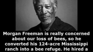 Morgan Freeman beekeeper